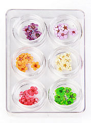 Nail Art Dry Flowers in Box 6 in 1
