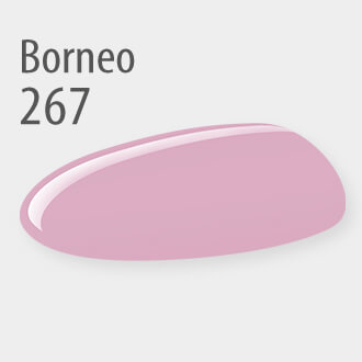 267 Borneo