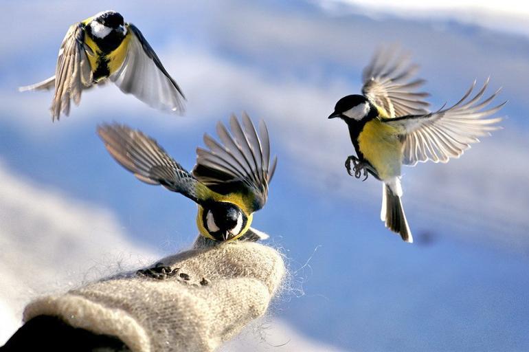 Чем кормить диких птиц зимой